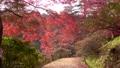 モミジ・秋の蛇の鼻遊楽園(福島県・本宮市) 60394446
