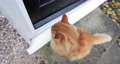 Close up of a cat waiting  to get home by the door 60526910