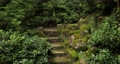 Forest trail in Japan with bridge 60564869