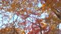 空と紅葉 ティルト撮影 60699777