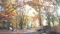 公園 紅葉 散歩道 パン撮影 60699780