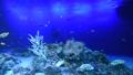 南国の海 水槽 水族館 60707099