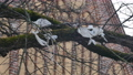 Plastic foil pollution in tree branches 60713709