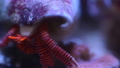 Hermit crab moving in underwater, time lapse 4k close up video. 60717333