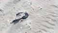 Plastic foil pollution in beach sand 60734736