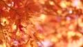 秋葉在日本 60955650