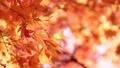 秋葉在日本 60955651