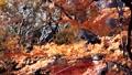 秋葉在日本 60955718