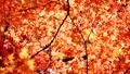 秋天的日本秋葉 60956617