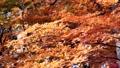 秋天的日本秋葉 60956623