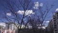 한겨울의 好日 산책 짐벌 촬영 60998238