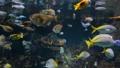 Fish swimming underwater 61085587