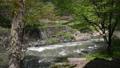 白馬村  大出の吊り橋 春 雪解け水流れる姫川 61200997