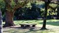 木の下にある公園のベンチ 61217987