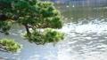 池の水面と松の枝 61218452