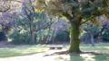 木の下にある公園のベンチ 61218457