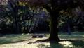木の下にある公園のベンチ 61218458