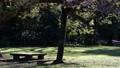 木の下にある公園のベンチ 61218479