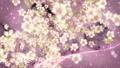 桜と墨のスパーク ループ 61277665