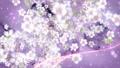 桜と墨のスパーク ループ 61277667