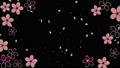 桜 背景 黒 61307071