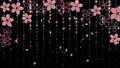 桜 背景 黒 61307072