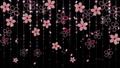 桜 背景 黒 61307074
