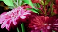 Alstroemeria and gerbera flowers with water drops on a black background 61567428
