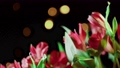 Alstroemeria and gerbera flowers with water drops on a black background 61567429