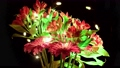 Alstroemeria and gerbera flowers with water drops on a black background 61567435