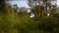 Camera moving through the grass, view of the park. Steadicam shot 61619891