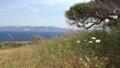 Old olive tree on rocky hill, Crete island. Greece 61710600