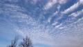 流れてゆくいわし雲 61718070