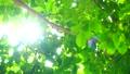 2020: ความเขียวขจีและแสงแดด 61762326