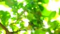 2020 สีเขียวสดและแสงตะวันออกจากโฟกัส 61762376