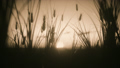 Sunset with Wheat in the wind - Sepia 61771692