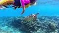 沖縄 渡嘉敷島でウミガメを観察する小学生 61809112