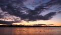 夕映えの川の風景(タイムラプス) 61837010