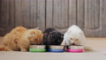 Three cats eat dry food from metal bowls on the kitchen floor 61868253