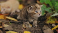 Cute kitten meows sitting on the ground in nature 61868254