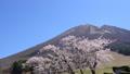 春の大山 桜と枡水原高原 フィクス 61881506