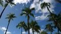 タイムラプス ハワイ ワイキキビーチ風に揺れる椰子の木 perming 映像素材 61903645