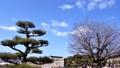 姫路城 備前丸から望む天守 62326552