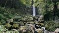 養老の滝 62465001