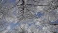 A tree high into the sky 62599621