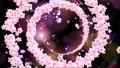 ぐるぐる桜 62757058