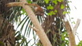 FullHD footage of wild monkey climbing the tree and hanging on branch at jungle forest 62896139