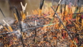 Closeup FullHD footage of flowing aromatic smoke and burnt ashes of incense sticks burning on altar at buddhist temple 62896143