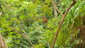 FullHD dolly video of wild monkey sitting on the tree branch at jungle forest 62902459