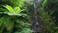 凱里瀑布(m美群島Kakeroma島) 63071461